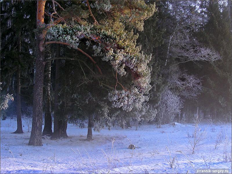 Лыжные походы по Подмосковью - окрестности Звенигорода