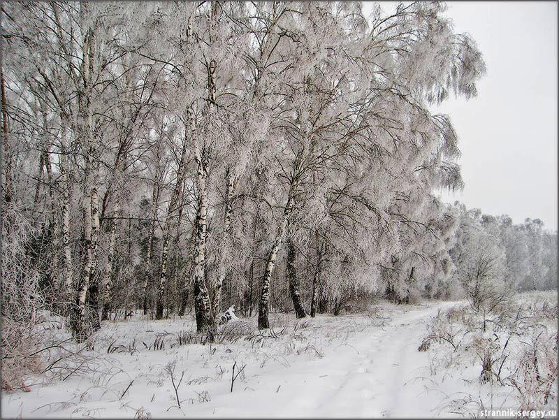 Лыжные походы по Подмосковью - окрестности Долгопрудного