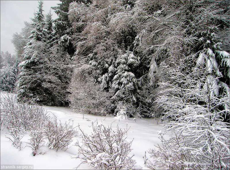 Лыжные походы по Подмосковью - окрестности Икши