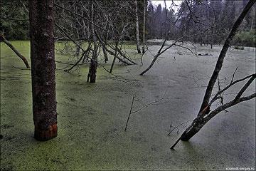 Пеший поход: пл. Покровка - Елино - Марфино - 1-я Лесная - Введенское - Сидорково - Тетерино - пл. Стреглово