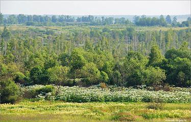 Исток Москва-река Окрестности