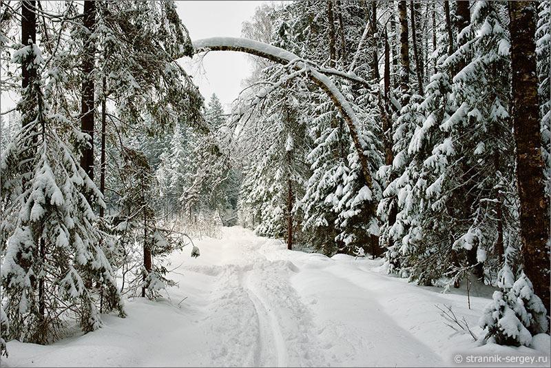 лыжный поход зимний лес