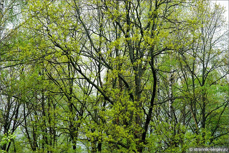 Река Киржач - дубовая роща