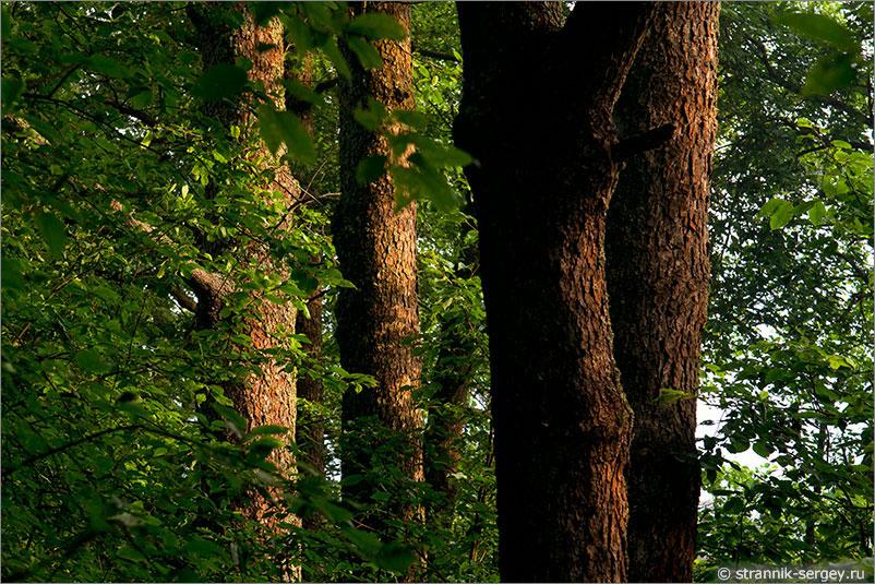 Русская природа - деревья