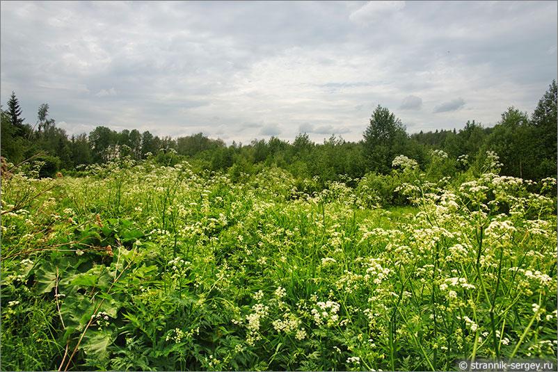Русская природа - луг