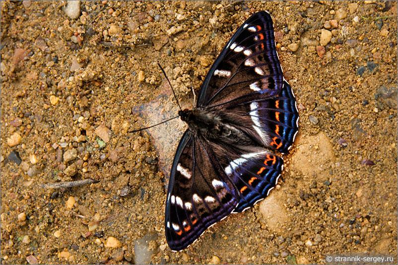 Русская природа - бабочка