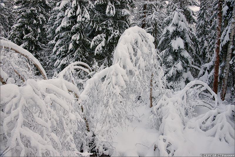 Фото Гжель Заснеженный лес