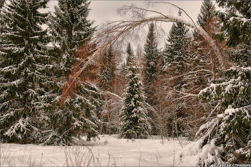 Фото Гжель Зимний лес