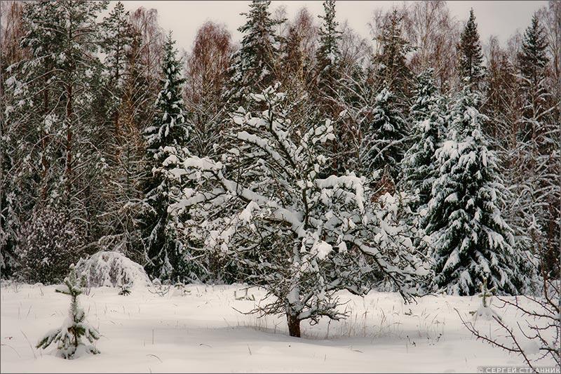 Фото Гжель Яблоня, покрытая снегом