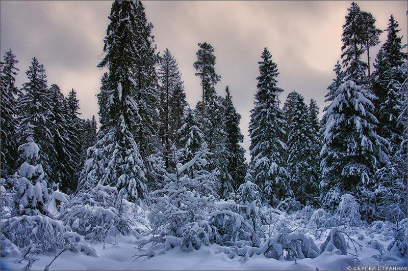Фото Гжель Сумерки в зимнем лесу