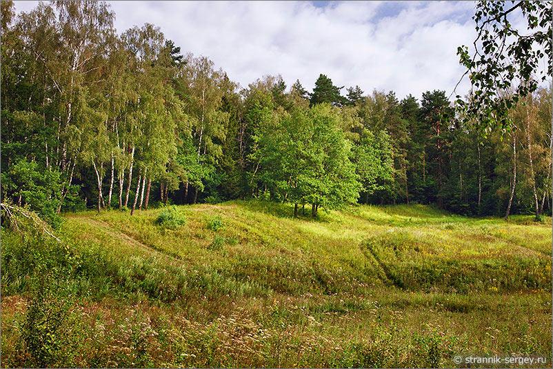 Петрица лесная поляна