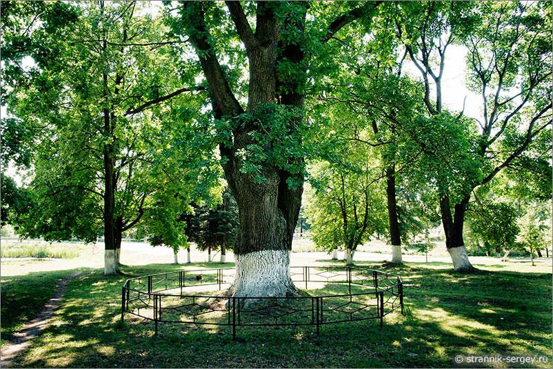 дворянская усадьба старинный дуб