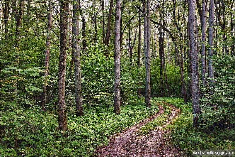 липовый лес кусты орешника