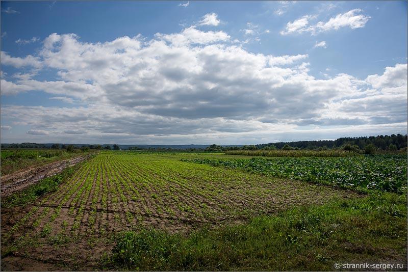 Село Турово пойма Оки овощное поле