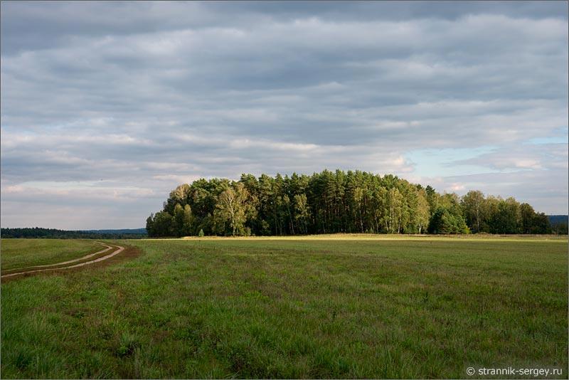 Лес Подмосковья