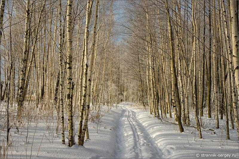 Зима березовая роща