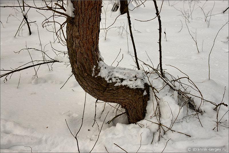 Зима лес