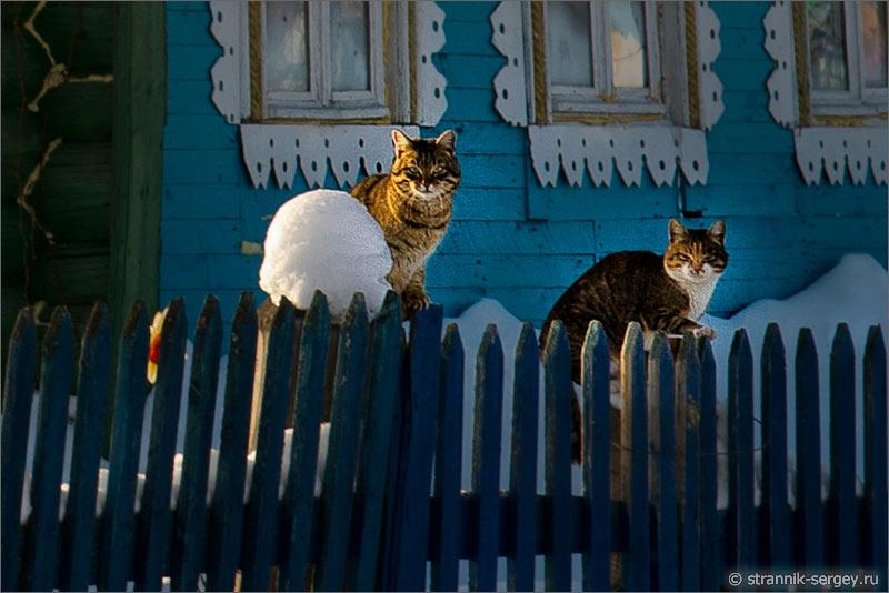 Зима избы коты