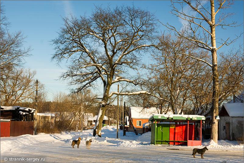 Зима село