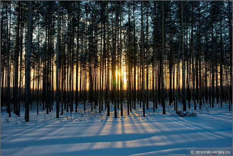 Зима лес заход солнца