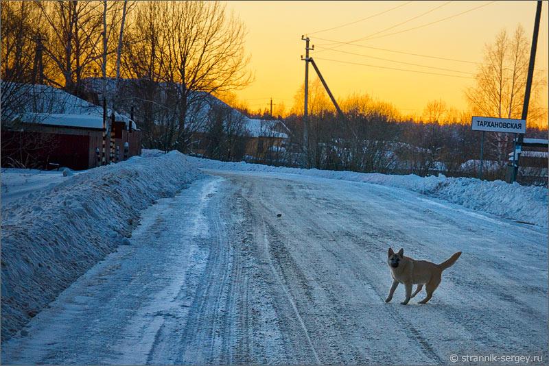 Зима деревня вечер