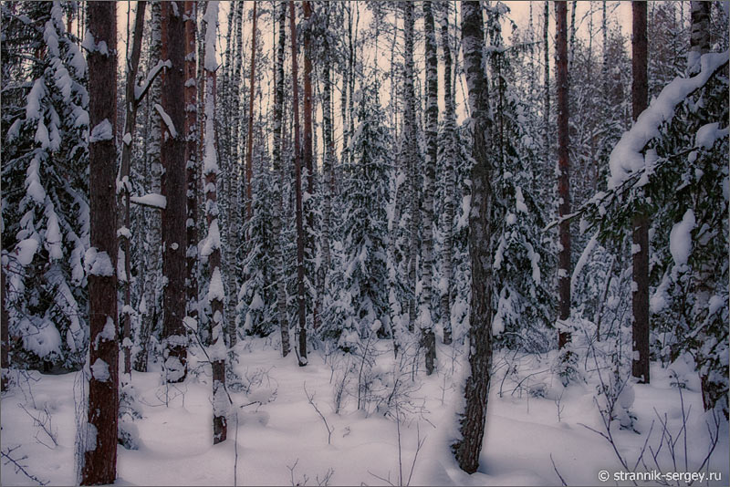 Зима зимняя ночь