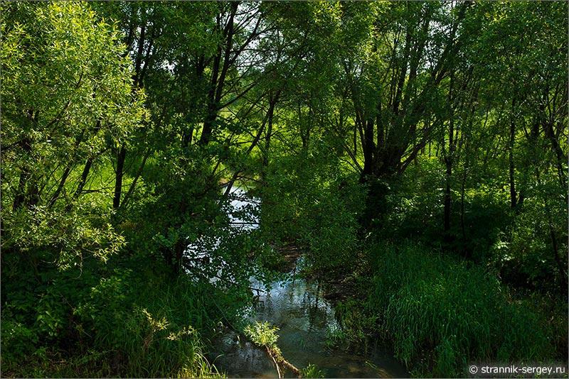 Как река ватаженка манят на фото лета
