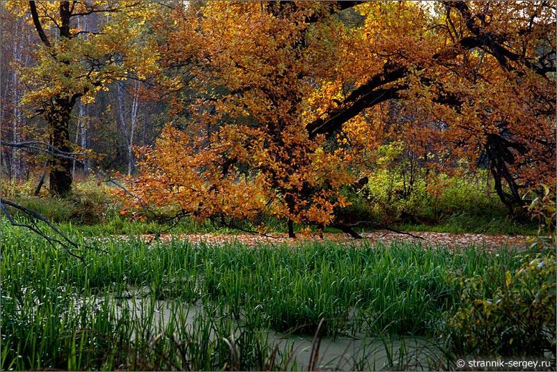 Осень  уголком 290