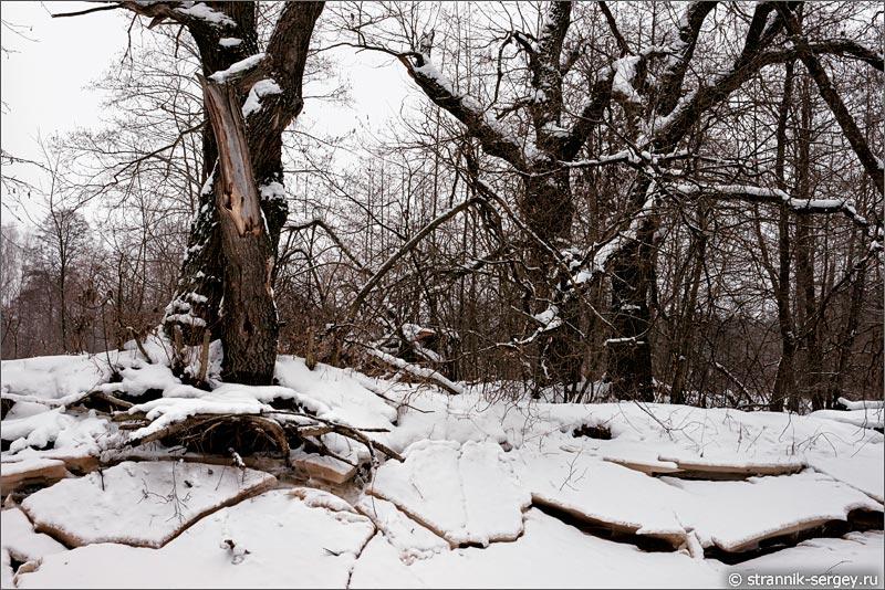 река Поля река зимой лед дубы