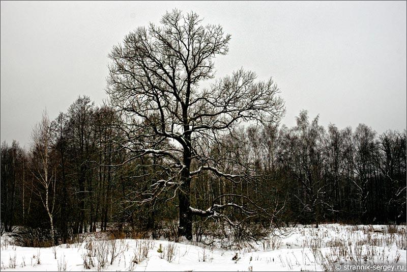 река Поля река зимой дуб