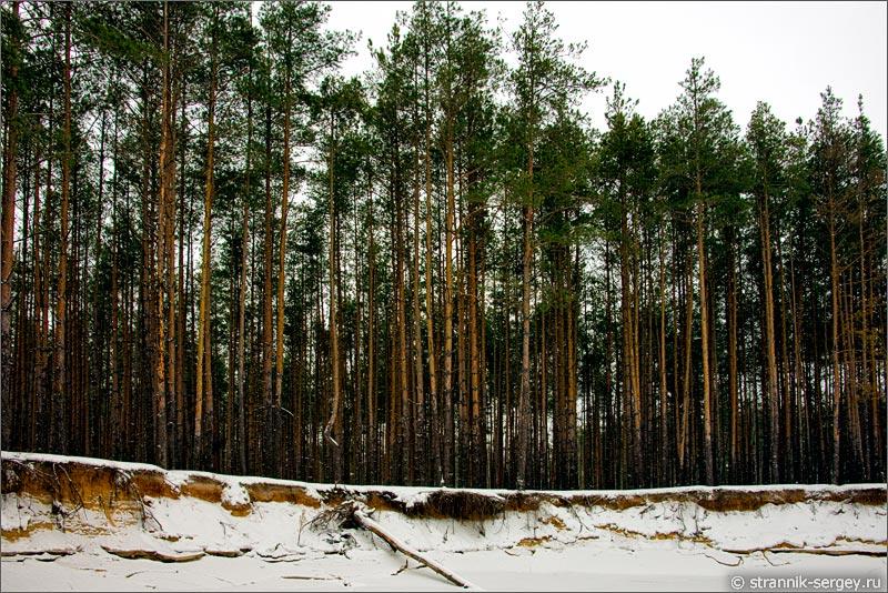 река Поля река зимой бор