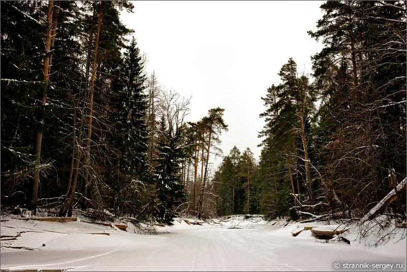 река Поля зимой зимний лес