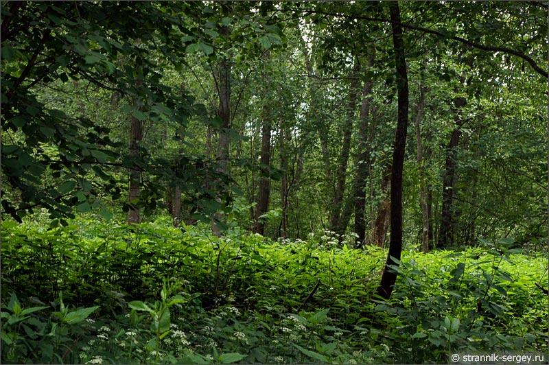 Ольховый лес на берегу реки Исьма
