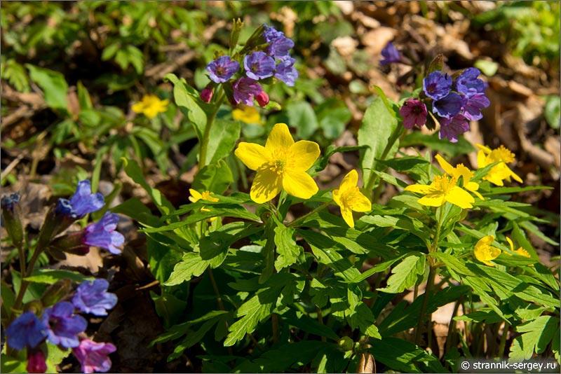 Цветы подснежники - фото
