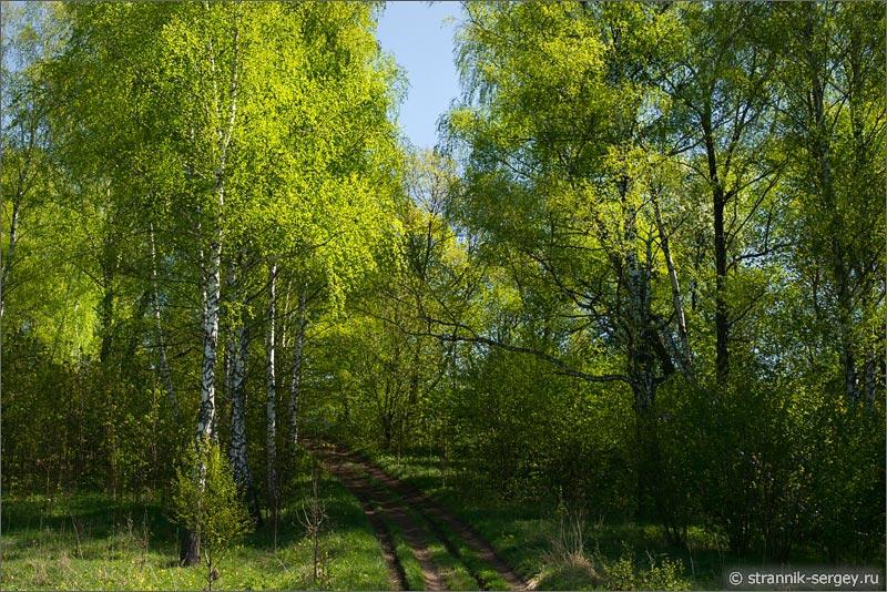 Как сфоткаться весной в лесу картинки
