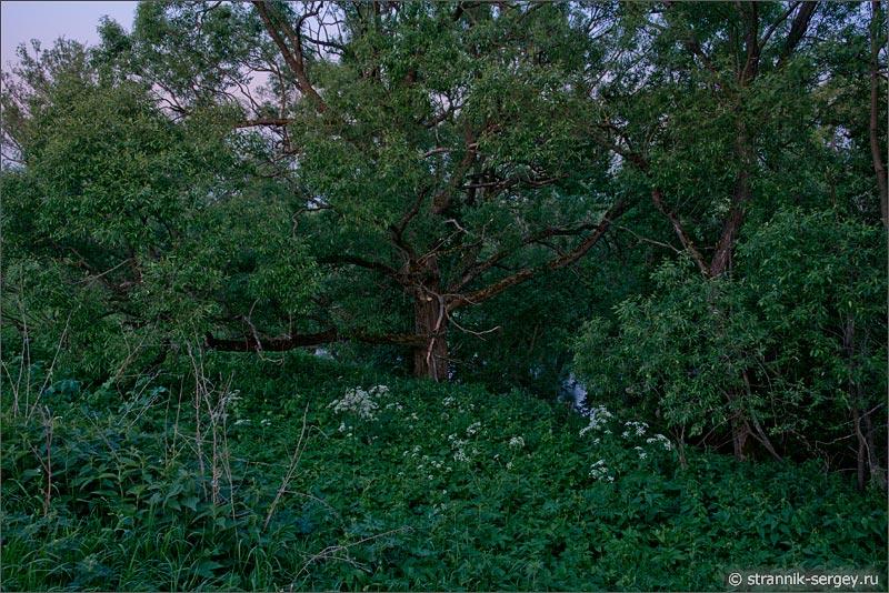 природа ночью летняя ночь сумерки