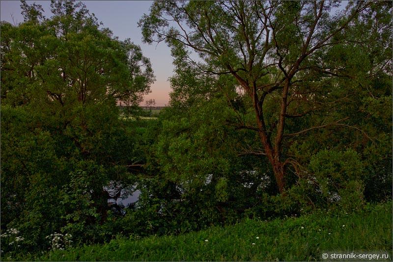Летнее утро рассвет река деревья ивы