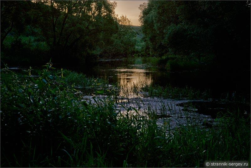Летнее утро восход солнца река ивы деревья камыши