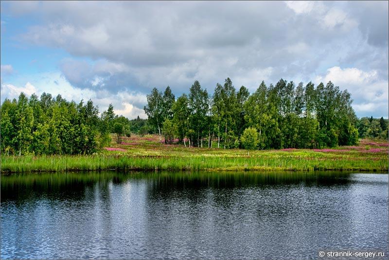 Полевые цветы луга на берегу озера