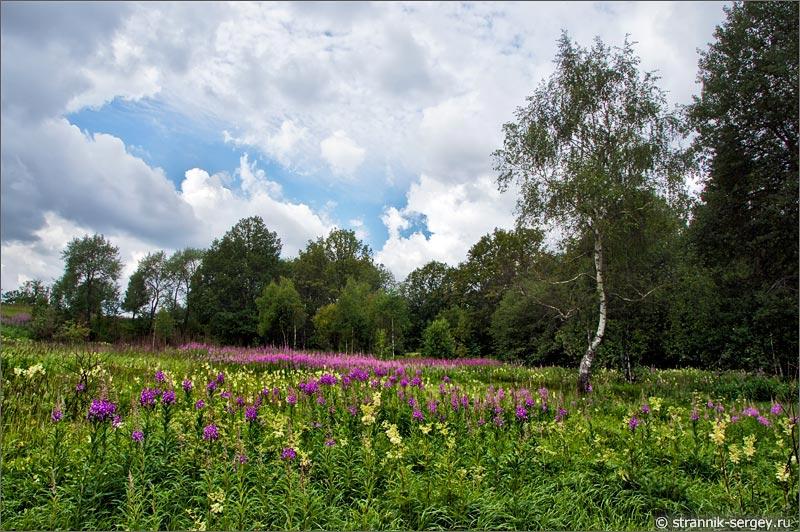 Полевые цветы луг береза холм