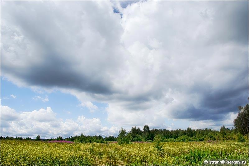 Полевые цветы луга облака