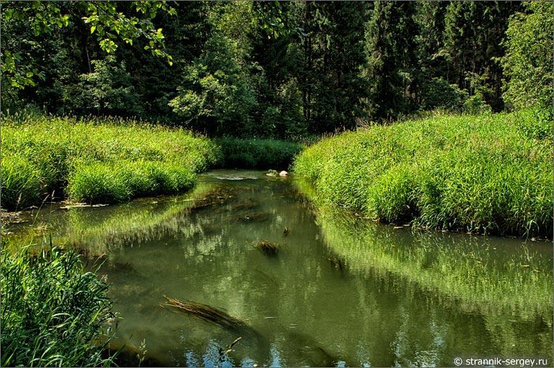река Дубна зеленые берега луга