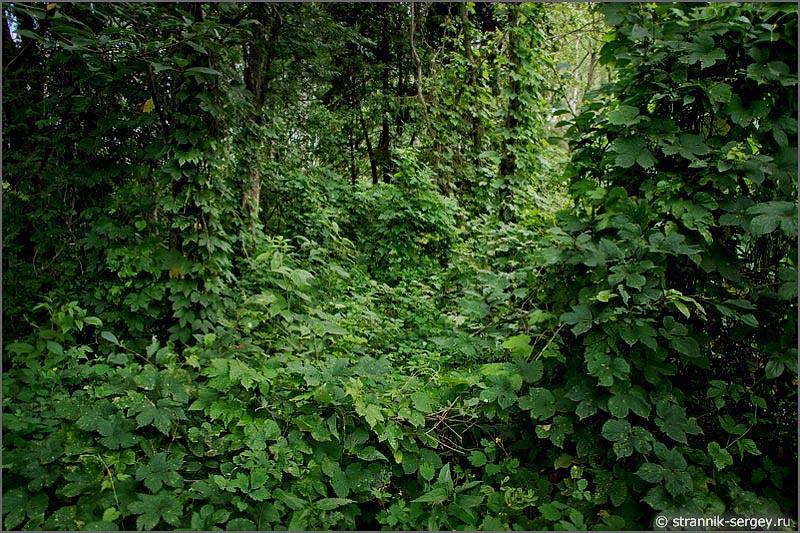 деревья лианы заросли
