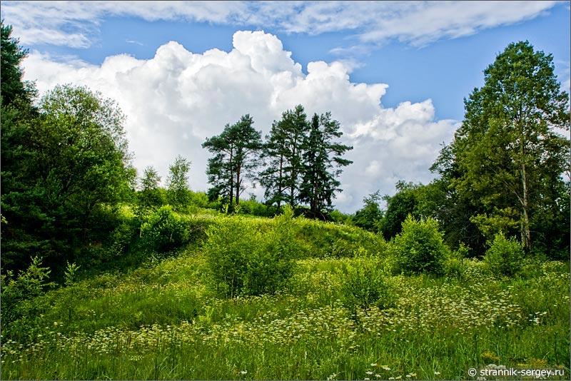 полевые цветы луга облака холмы