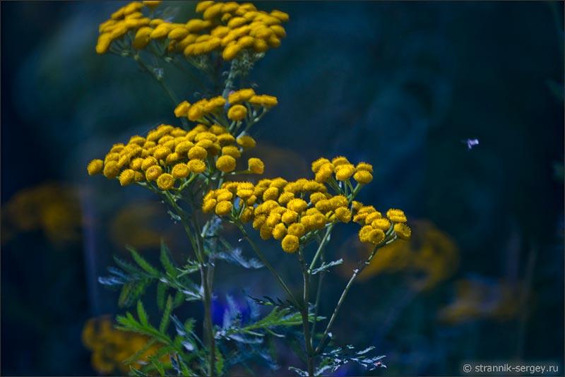 Картинки август природа цветы