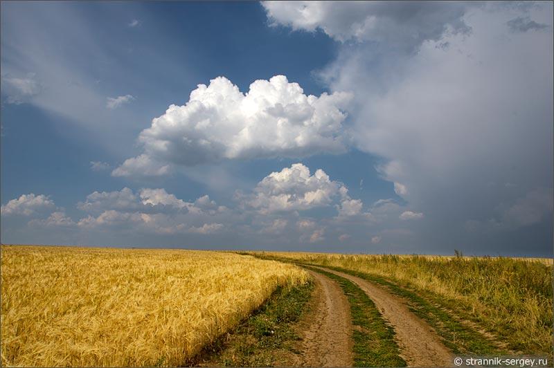 Красивые фото в поле с пшеницей