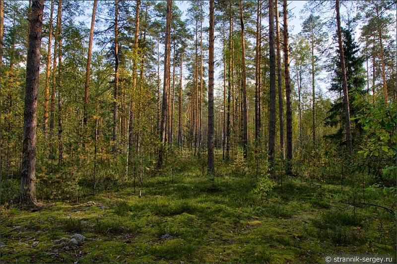 Грибы ягоды лес осенью в подмосковье