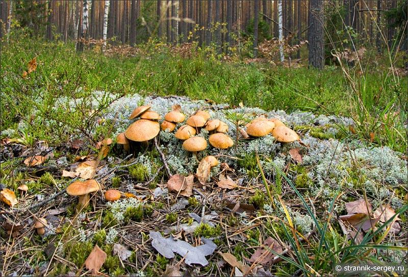 лес фото грибы