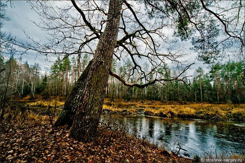 Поздняя осень, ноябрь: деревья в лесу фото картина ...