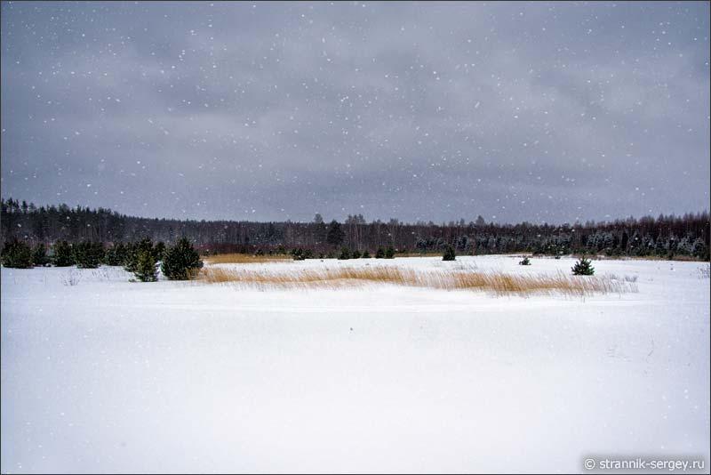 Еловый лес лыжный поход Кубринск река Сулать